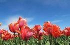 flower-140-02
