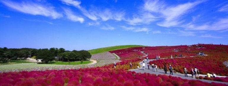 梨子吃到飽&阿見名牌購物中心 常陸海浜公園賞季節花卉 (編號 : 05549 )