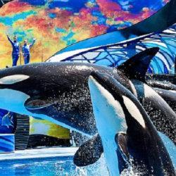 4天迪士尼,海洋世界,環球影城  (GH) $1,038.00 起