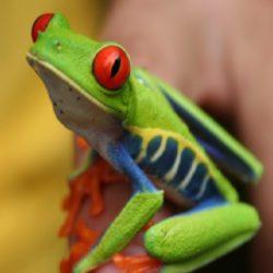 哥斯達黎加自然生態 7 天遊 Sep 18 (IAmigo) US$1,488.00 起
