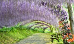(ANA 全日空) 日本鳥取 – 島根 – 廣島 – 北九州市足利紫藤絕色美景10天遊