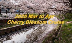 2020 Cherry Blossom 日本櫻花