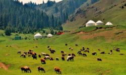 中國北疆完完整整全覽十四天精彩遊
