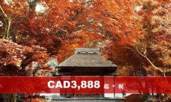 北海道札幌秋天紅葉溫泉八天特色遊