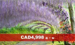 日本鳥取-島根-廣島-北九州市足利紫藤絕色-富士芝櫻美景10天遊