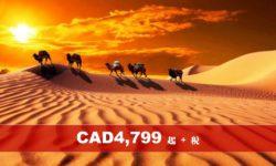 沙漠駝鈴 中原文化 絲綢之路15天 (NH) (純玩團)
