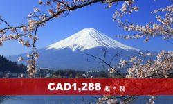 東京 富士山 6 日 4 晚合家歡